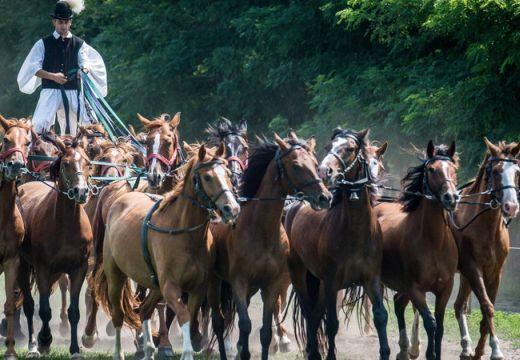 Guinness-rekordot döntött Besze Gábor és 17 lova Bács-Kiskunban