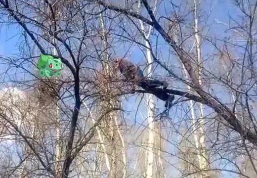 Lezuhant a fáról a Pokémon Go-játékos – nézd meg a felvételt!