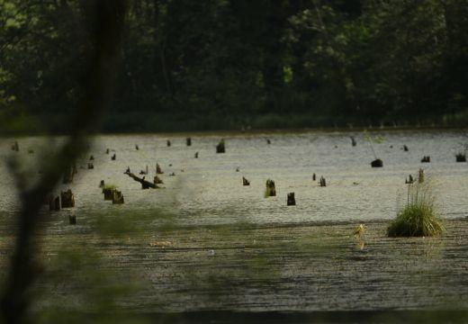 A Gyilkos-tó jövőjéről és az öreg fák védelméről a Térképben
