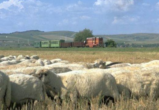 Újjáindulhat a vasúti közlekedés Marosvásárhely és Szováta között