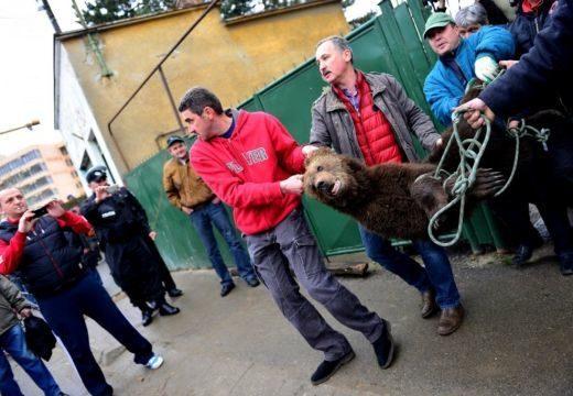 Lelőtték a Nagyszeben központjában sétáló medvét
