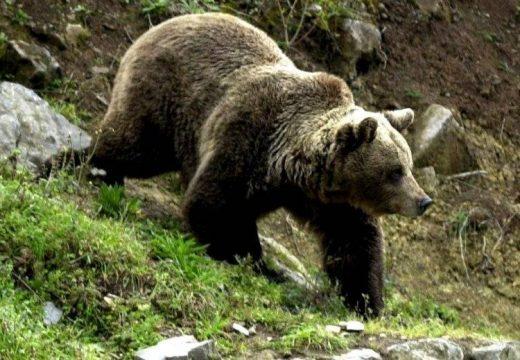 Vaslábi gazdaságban garázdálkodott a medve