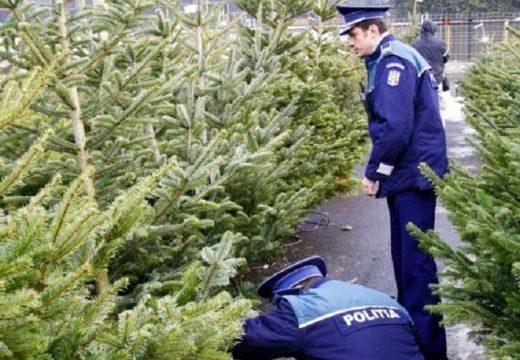 Lecsapott a rendőrség az illegális fenyőfabizniszre