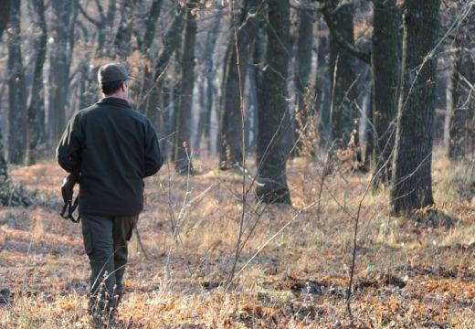 Ki őrzi az erdőt? Új szabályozás lépett érvénybe