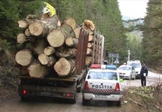 Iparszerűen lopják az erdőt – 16 milliós büntetés!