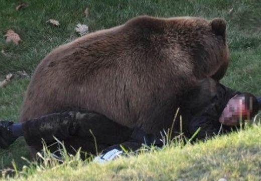 Medvetámadás Zetelaka közelében! A székelyudvarhelyi kórházban ápolják az áldozatot