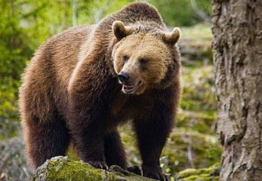 Ideges medve támadt egy vadászra