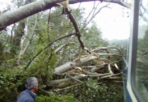 Marosvásárhely: A vasút menti fák is zavaróak