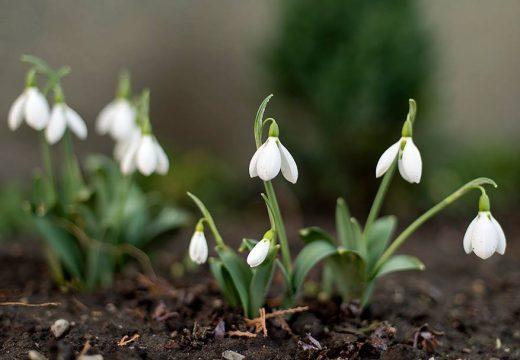 Megfejtették, hogyan hódították meg a Földet a virágos növények