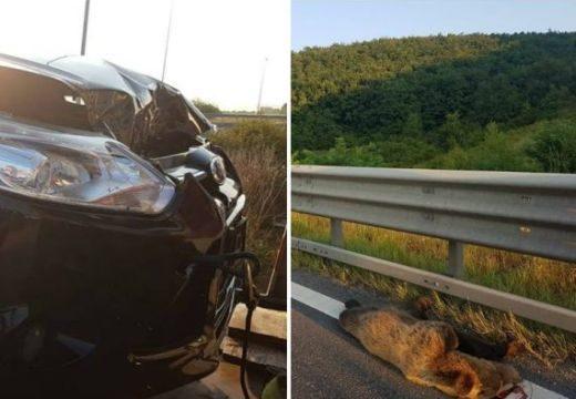 Medvét gázoltak az autópályán – három napon belül ez a második ilyen eset