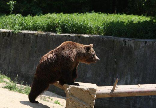 Medvék az iskolaudvaron