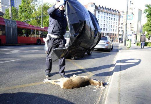 Baleset Józsefvárosban: elütöttek egy őzet a Kálvária téren