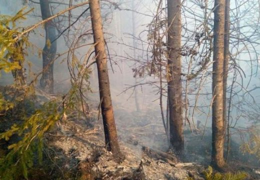 Erdőtűz után Gyergyószentmiklósnál