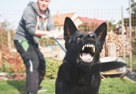 Ráuszította kutyáját a rendőrökre az ittas férfi