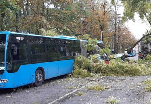 Fa dőlt egy buszra – mentőt kértek a helyszínre