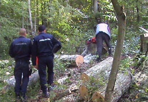 Fejbeverte a favágót az ág, meghalt – tragédia Gödemesterházán