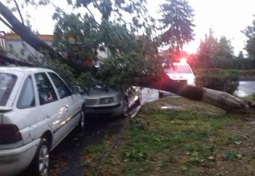Autóra és útra is dőltek fák Marosvásárhelyen