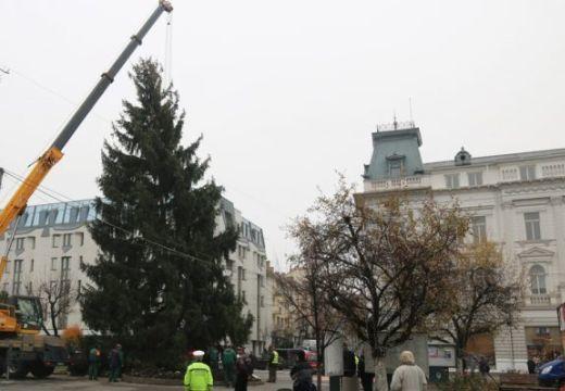"""""""Újrahasznosított"""" karácsonyfája lesz idén Marosvásárhelynek"""