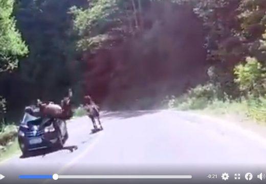 Szembefutott két ló, az egyiket elgázolta